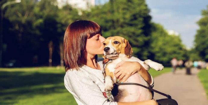 Apa saja alasan umum memelihara anjing ?