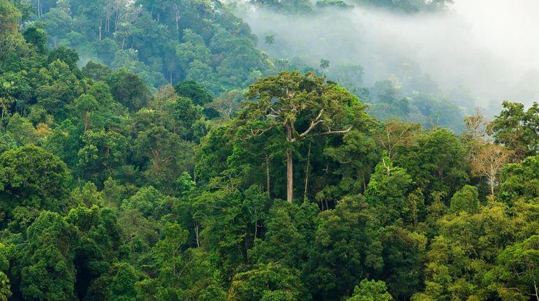 47+ Gambar Hewan Di Hutan Hujan Tropis Gratis