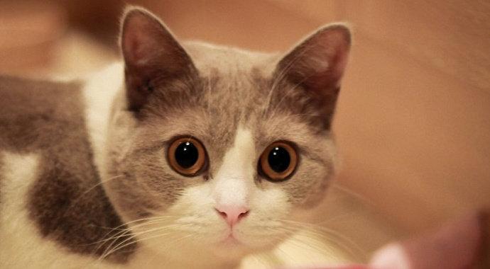 Apa Saja Ciri Ciri Kucing Yang Mengalami Trauma Diskusi