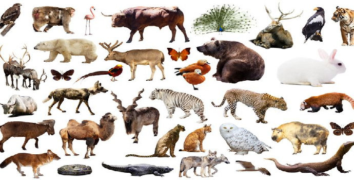 spesies terancam punah