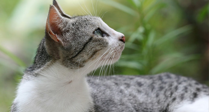 Apa Saja Kelebihan Kucing Kampung Dari Kucing Ras Hewan Peliharaan Dictio Community