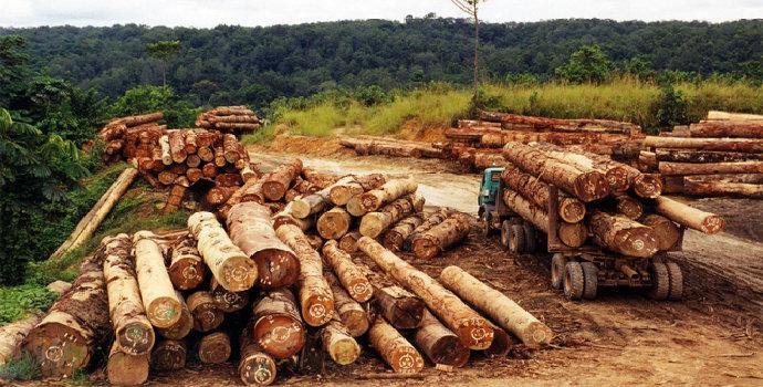 eksplotasi hutan