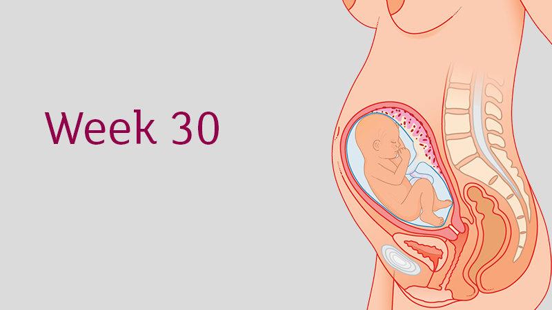 pertumbuhan bayi dalam kandungan