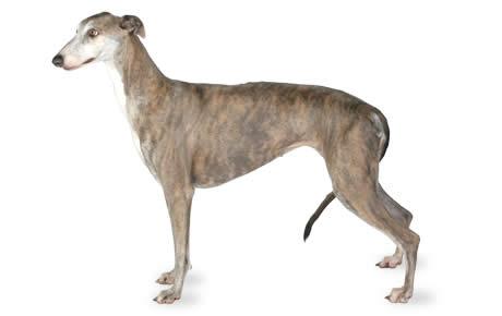 file_23024_greyhound
