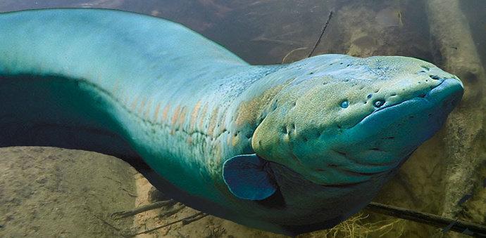 ikan Hutan Amazon