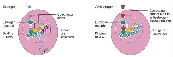 Antiestrogen