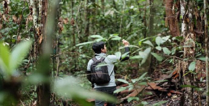 konservasi hutan