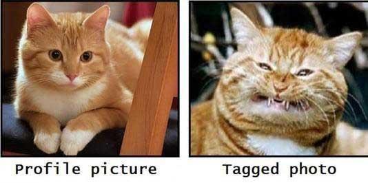 612384-foto-profil-vs-tag-