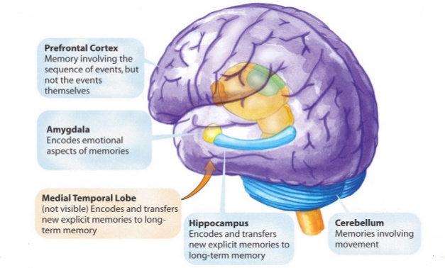 memori dan kognisi