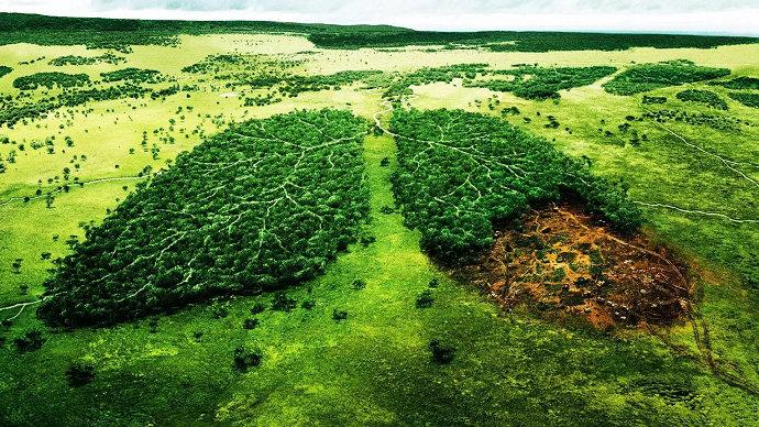 Environmentalisme