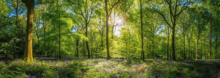 Ekonomi Sumber Daya Alam,  Sumber Daya Hutan , Penggolongan Hutan, dan Manfaat Hutan Bagi Kehidupan