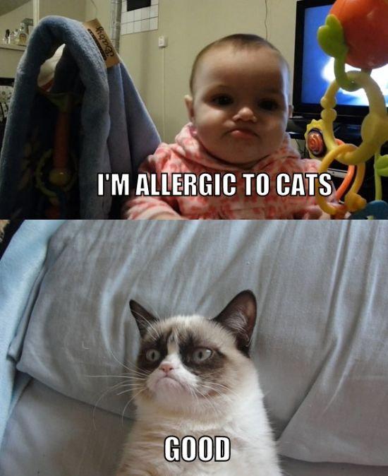 734743-10-meme-grumpy-cat