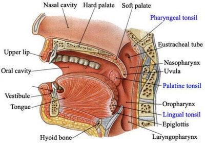 Penyakit Amandel atau Tonsilitis