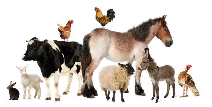 Apa saja faktor yang memengaruhi pertumbuhan hewan?