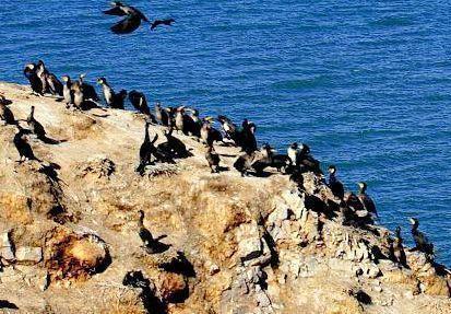 Pulau-Burung