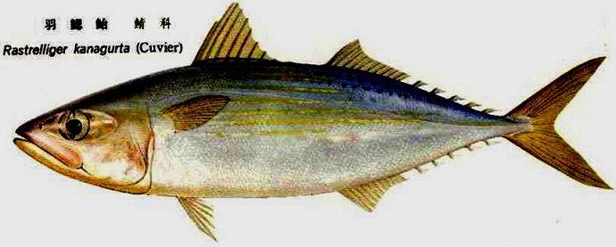 Ikan yang bersifat simetris bilateral