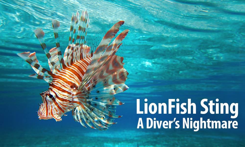 Ikan Lionfish
