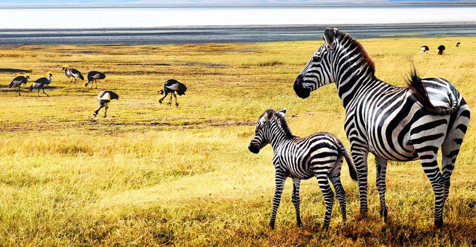 Taman Nasional Serengeti