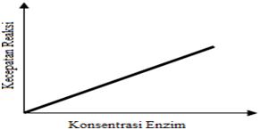 Hubungan laju reaksi dengan konsentrasi enzim