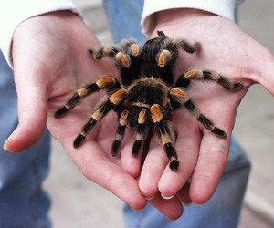 Foto-tarantula-300x250