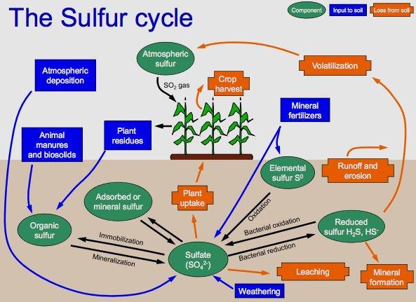 Siklus Belerang (S) dalam tanah