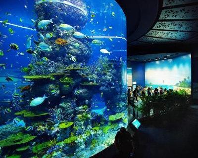 sea-aquarium-di-pulau-sentosa