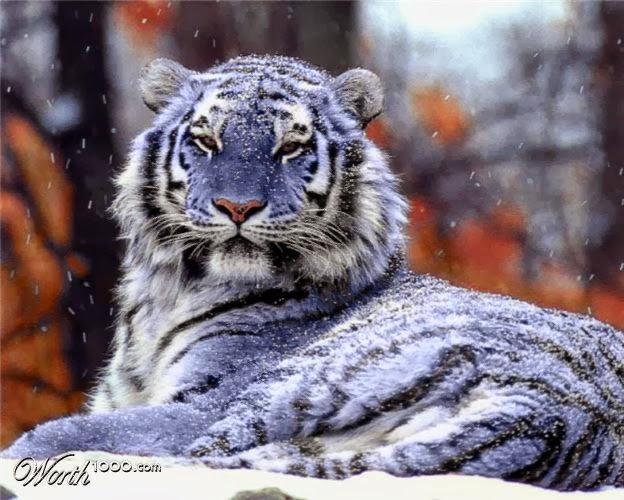 Unduh 67+  Gambar Kucing Hutan Kalimantan Lucu