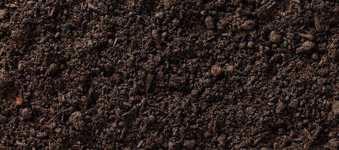 Mineralisasi tanah