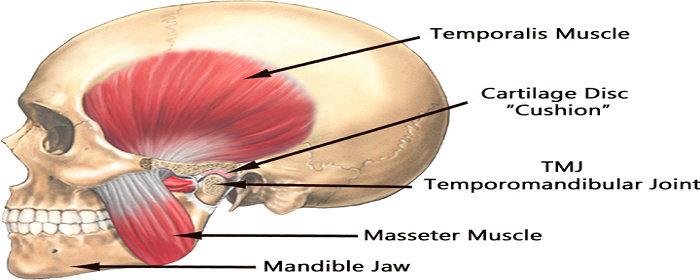 Sendi temporo mandibular
