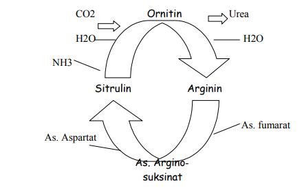 Apakah yang dimaksud dengan siklus nitrogen di dalam tanah ilmu image ccuart Images