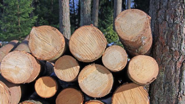 Kayu atau wood
