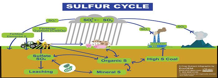 Siklus belerang atau siklus sulfur