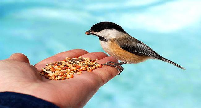 Apa saja jenis campuran makanan untuk burung ?