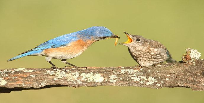 Apa saja jenis makanan burung yang Anda ketahui ?