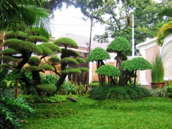 contoh-tanaman-taman-rumah-minimalis-yang-teduh