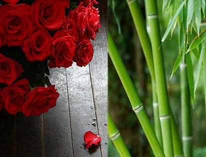 mawar dan bambu