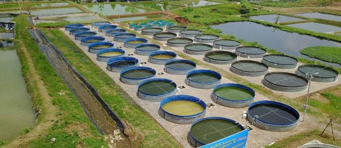 Bagaimana Cara Membuat Kolam Bioflok Alami Untuk Ikan Diskusi Perikanan Dictio Community