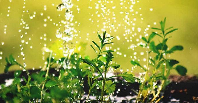 Penyerapan air oleh tanaman