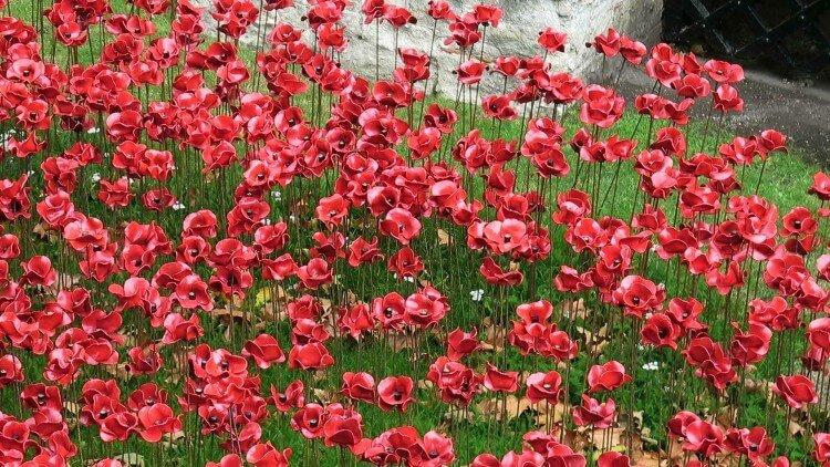 lukisan-bunga-popy