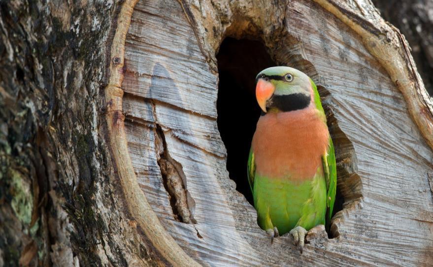 Harga Burung Betet Di Pasaran Hewan Peliharaan Dictio Community