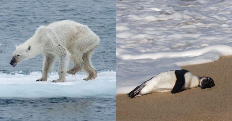 750xauto-miris-ini-10-hewan-yang-terancam-punah-karena-dampak-pemanasan-global-180328x