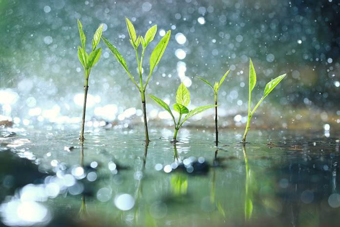 kebutuhan air tanaman