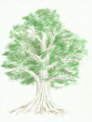 Langkah Langkah Dalam Menggambar Pohon Dengan Pensil Warna Seni