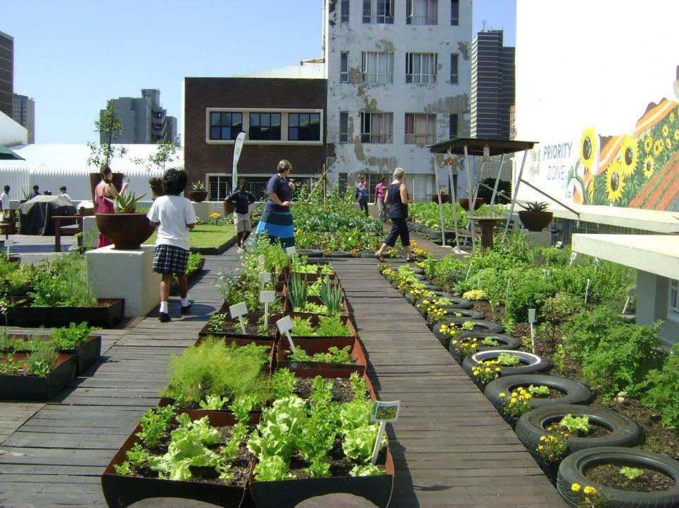 Rooftop Urban Farming 1