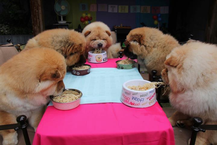 Asupan Makanan Untuk Anjing Chow Chow Hewan Peliharaan Dictio Community